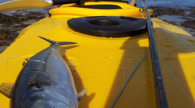 Kajak første tur med makrel på flue