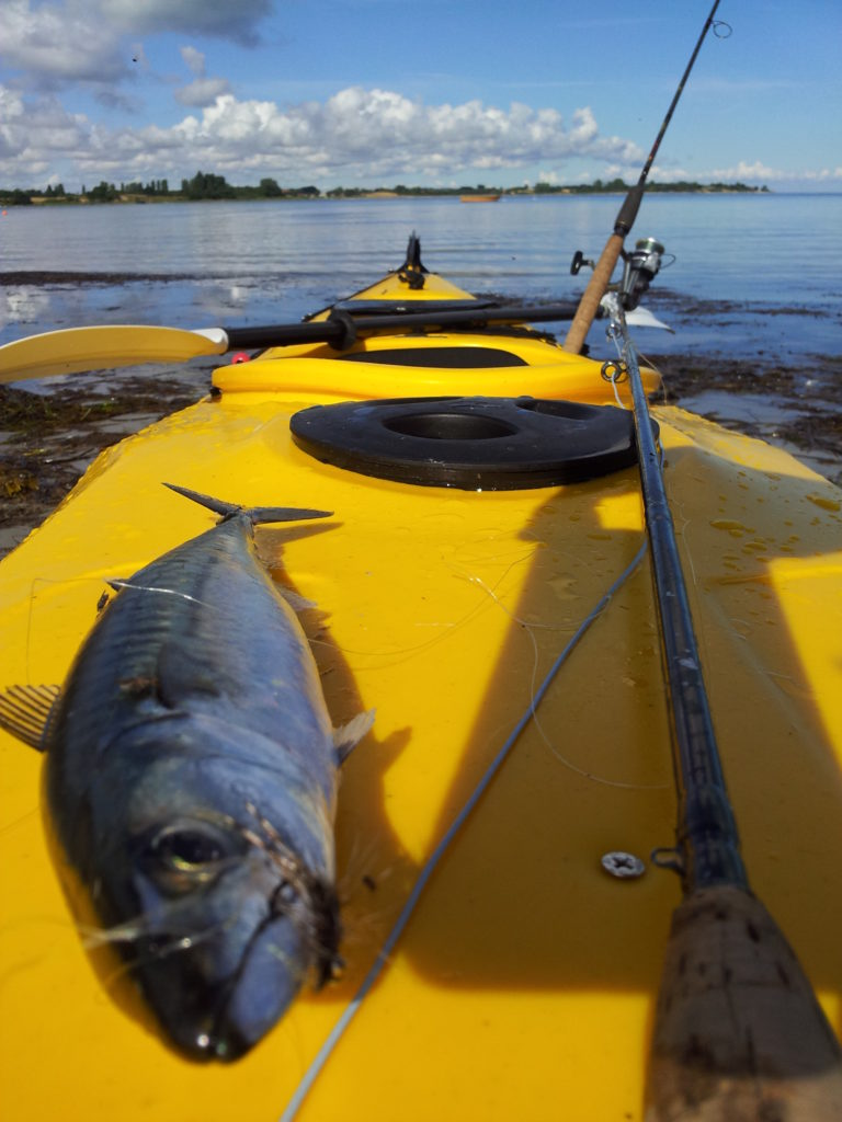 Makrel fra kajak